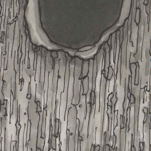 A texture of black lines and warm gray tones in marker and ink, with a ragged half of a hole on top