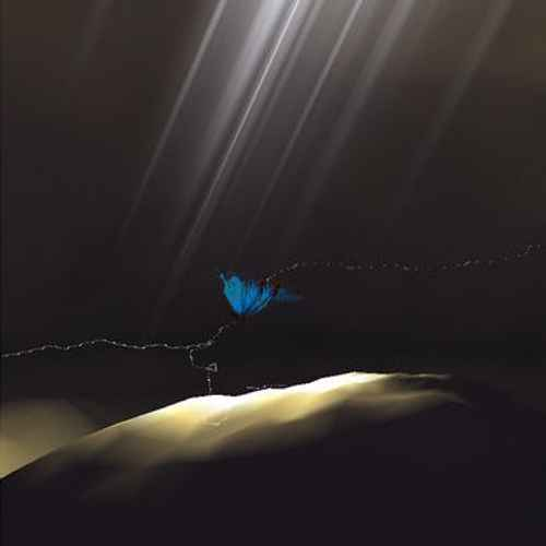 A butterfly following a dotted line, god rays from above casting bright light on the ground below